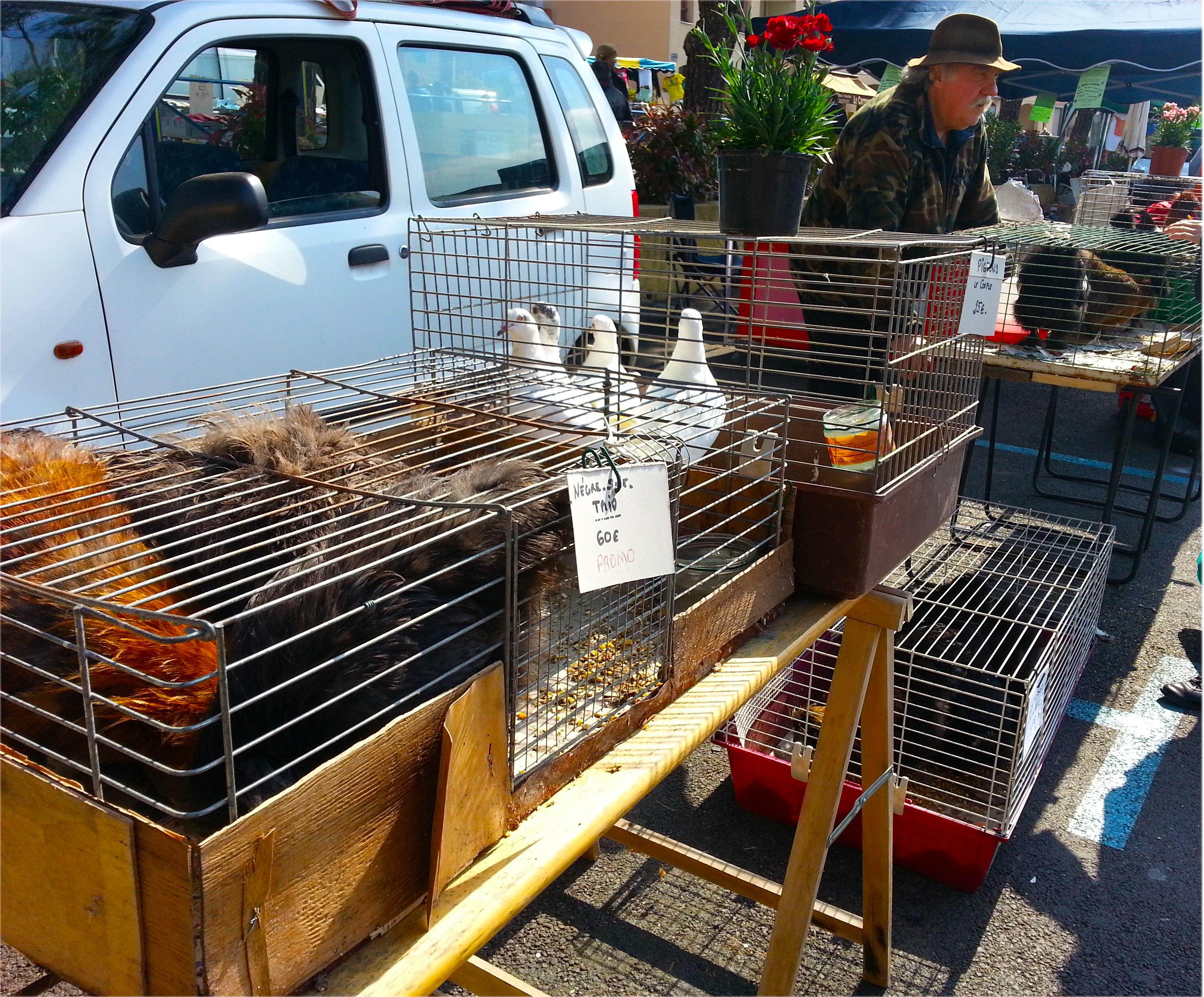 stand de vente de poules Foire de Printemps de Carros