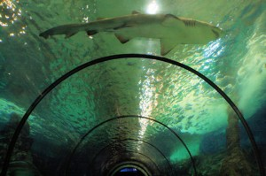tunnel requins marineland antibes côte d'azur