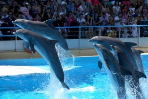 dauphins marineland spectacle antibes côte d'azur