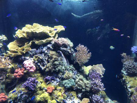 lagon coraux musée océanographique de monaco