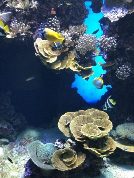 récif corail musée océanographique monaco