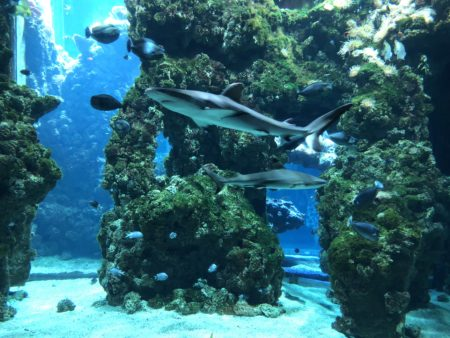 lagon requins musée océanographique de monaco