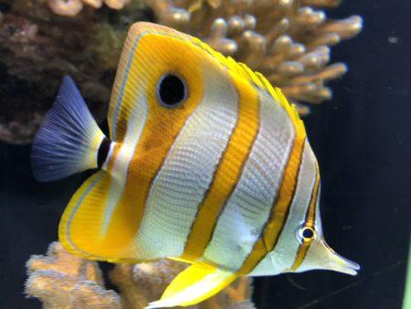 poisson jaune et blanc musée océanographique monaco