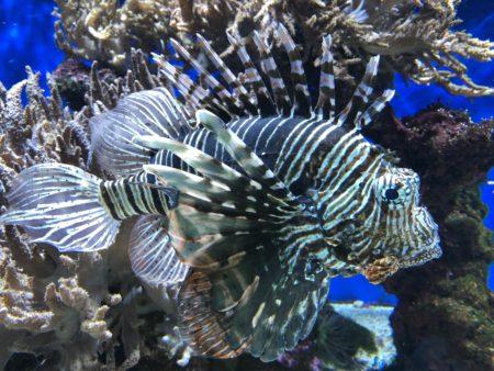 poisson bizarre musée océanographique monaco