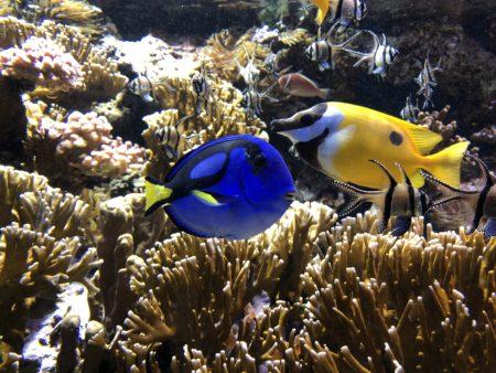 poissons dans nemo musée océanographique monaco