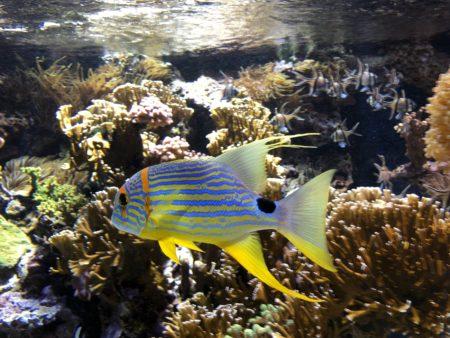 joli poisson aquarium musée océanographique de monaco