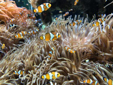 poisson nemo aquarium musée océanographique monaco