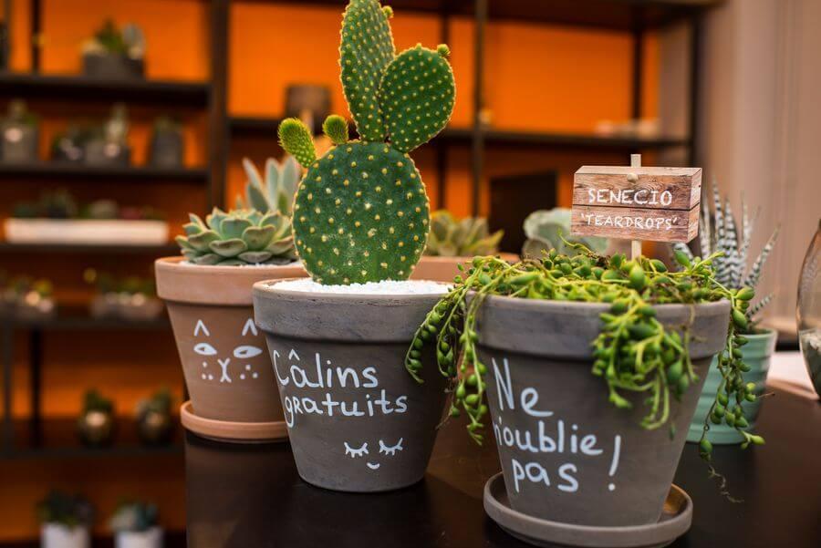 CACTUS NICE : plantes grasses sur la Côte d'Azur